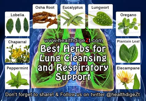 Lung Detox Herbs by Change The Person In The Mirror Before We Decide To