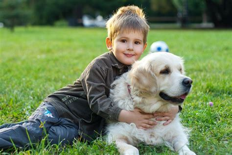puppies and toddlers dogs and children age appropriate care for pets4homes