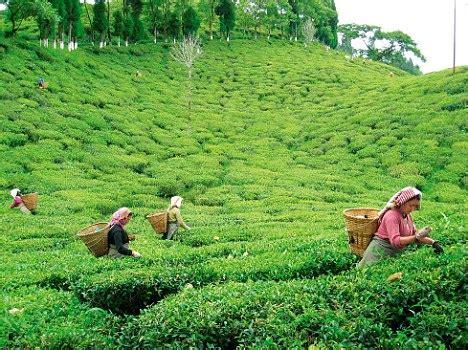 kalimpong news tea estate owners meet hills mp  open