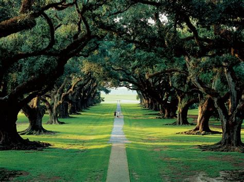 oak alley plantation new orleans plantation country oak alley plantation the grand dame of the great river