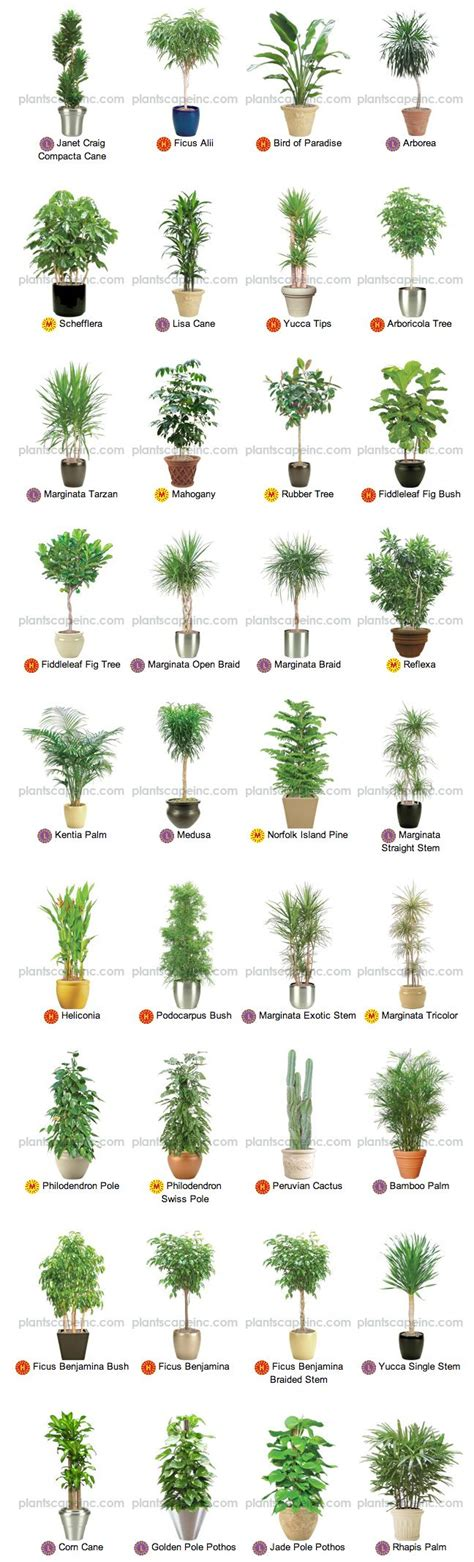 plants for indoors large indoor plants for interior landscaping by plantscape
