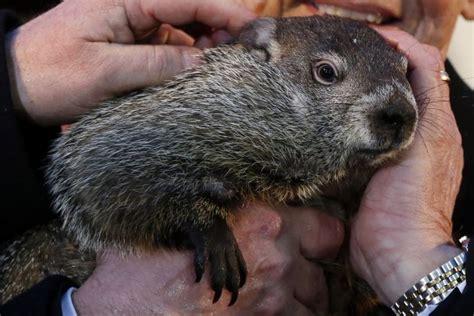 groundhog day australia punxatawney phil saw his shadow that means six more