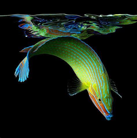 imagenes increiblemente bellas retratos de ne 243 n im 225 genes de la vida marina friki net