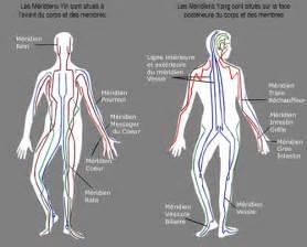 le m 233 ridien du poumon yog