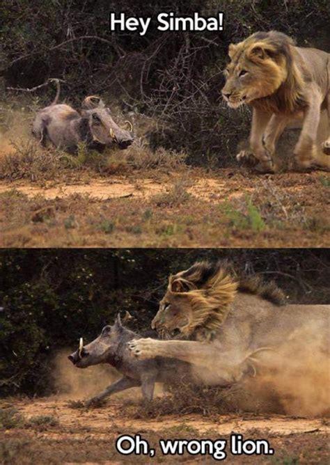 Lion Sex Meme - the lion king the white devil