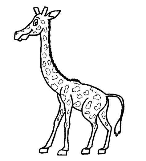 imagenes de jirafas animadas para dibujar dibujos para colorear gt animales jirafas