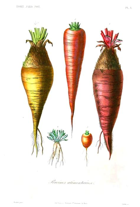 are carrots a root vegetable the metal element 171 karuna center for healing arts