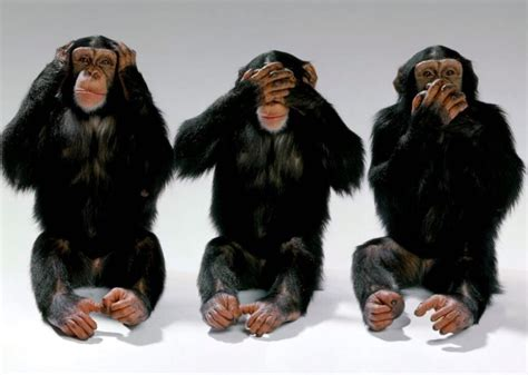 hear no evil speak no evil see no evil tattoo language emotional intelligence nonverbal
