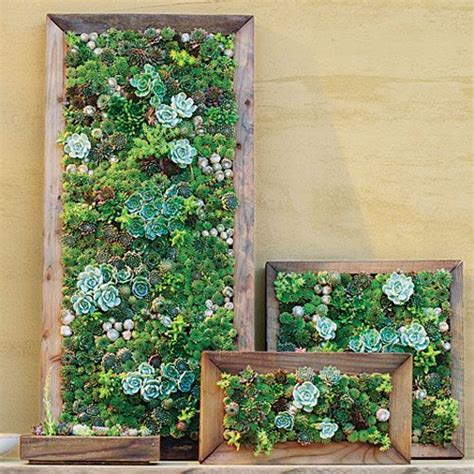 Vertical Garden Frames 1000 Ideas About Succulent Frame On Succulent