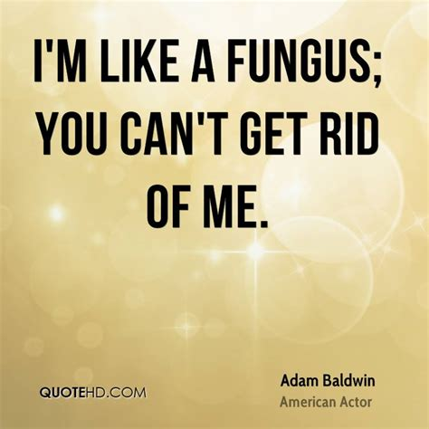 How To Get An Mba When You Cant Affort It by Adam Baldwin Quotes Quotehd