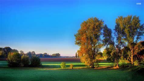 imagenes de paisajes relajantes hd calico 193 rboles y cos relajantes fondos de pantalla