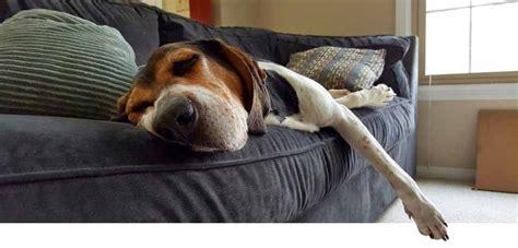 como limpiar un sofa de tela c 243 mo limpiar un sof 225 de tela en casa y sobrevivir para
