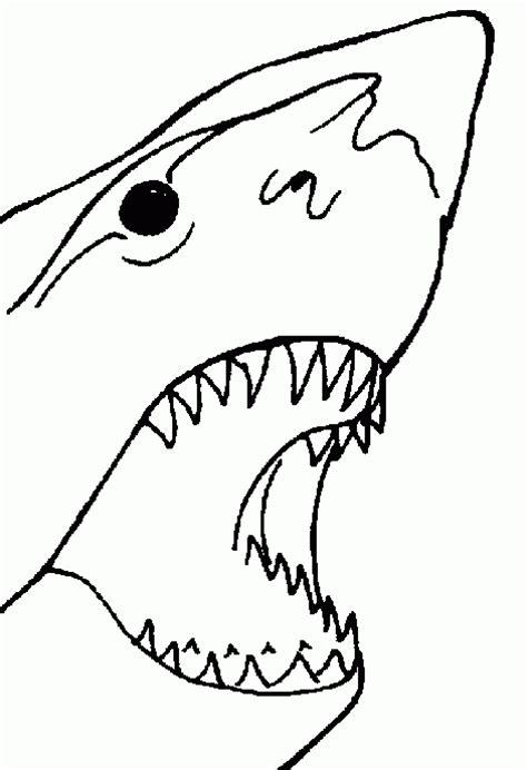 imagenes en blanco para pintar tibur 243 n blanco para colorear im 225 genes y fotos