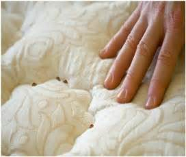 how to get rid of bed bugs at home how to get rid of bed bugs at home