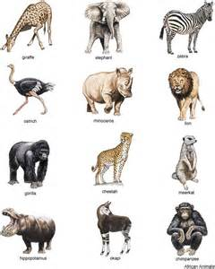 american zoo a sociological safari books from color animal illustrations cd rom and book