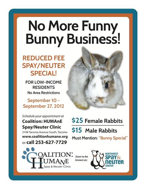 neutering aftercare special bunny adoptable special needs house rabbit rescue special bunny news