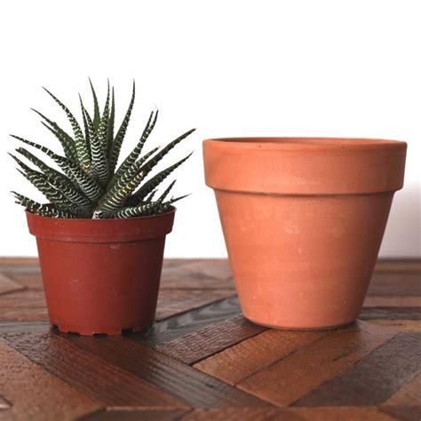 vaso per piante grasse rinvaso piante grasse piante grasse come rinvasare le