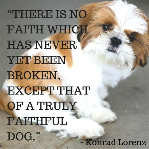 quote about dogs loyal quotes www imgkid the image kid has it