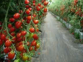 Fruit Trees Perth Nursery - forum fruit trees in perth wa