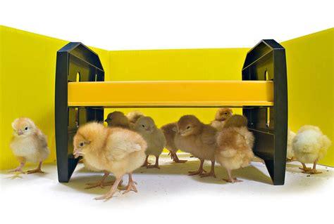 Heat Lamp For Ducklings by Panneaux Pour Parc 224 Poussins Vendus Par 8 Elevage Et