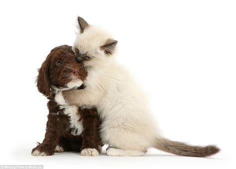 Healthylac For Puppies Kittens Isi 10 ducks and rabbits and even cats and dogs can be the best