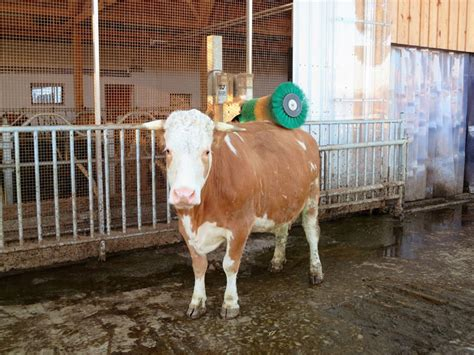 stall für kaninchen herzlich willkommen auf dem pfefferhof im bayerischen wald