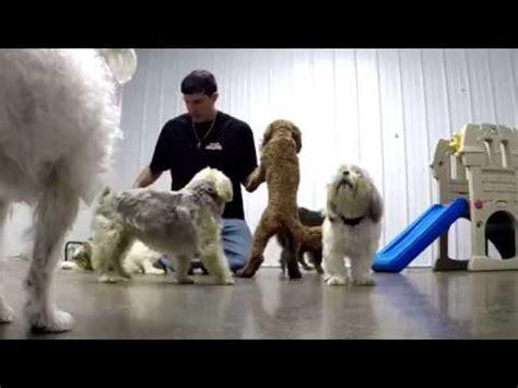 carms dog house in syracuse elaegypt