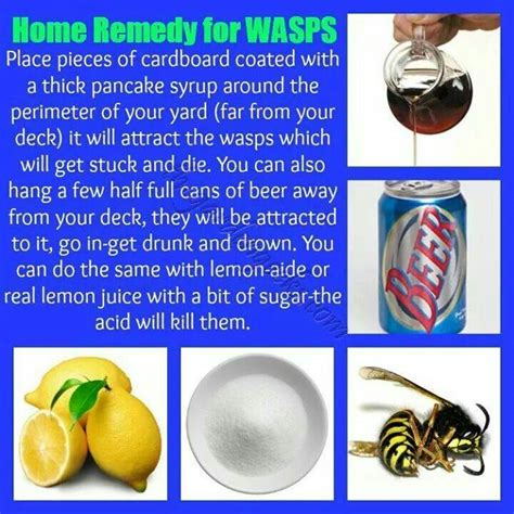 25 best ideas about wasp traps on killing