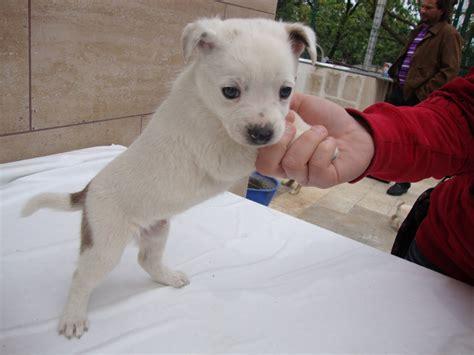 cani di piccola taglia per appartamento cani da appartamento piccola taglia divani colorati