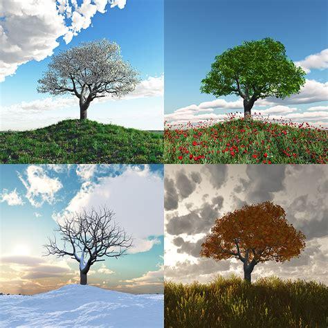four seasons tree car interior design