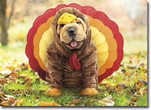 dogs thanksgiving turkey dog funny shar pei thanksgiving card greeting