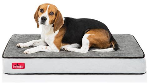 How To Clean A Dog Bed An Ultimate Guide To Clean A Dog Bed In 2018