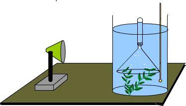 design experiment photosynthesis dcsks3science plant reactions