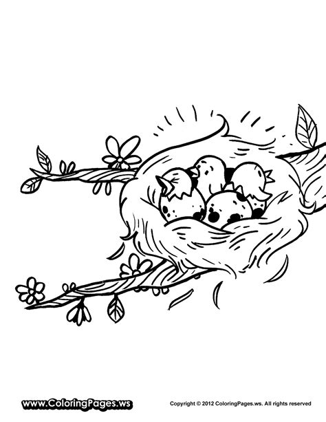 coloring pages of birds in a nest nest coloring page coloring home