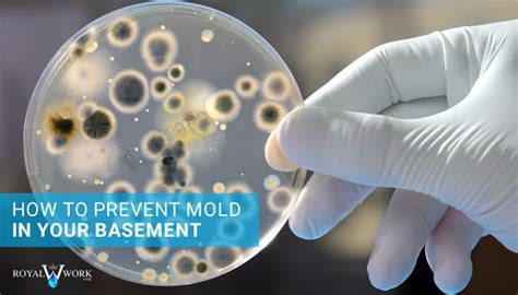 how to prevent mold in basement how to prevent mold in your basement