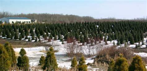 canadian christmas tree growers