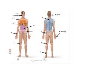 Human body cavities diagram human free engine image for user manual