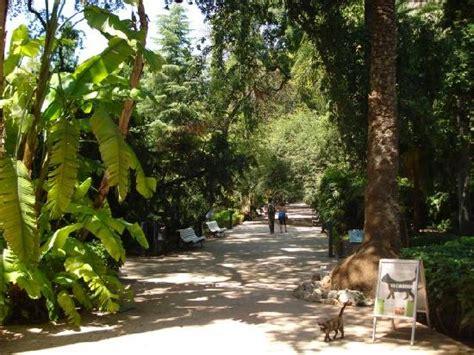 giardino botanico valencia foto de jard 237 n bot 225 nico valencia giardino bootanico