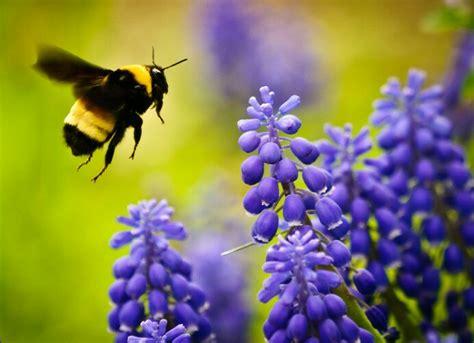 Bee Garden Flowers Bee Garden Step By Step Guide To Invite Bees In Garden Balcony Garden Web