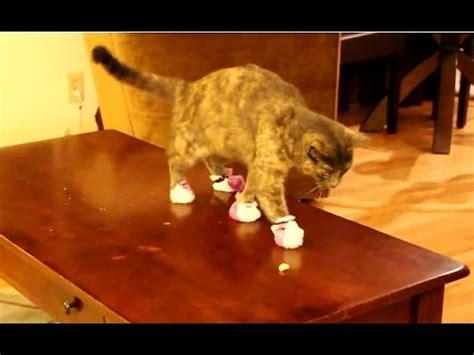 quot cats wearing socks compilation quot cfs
