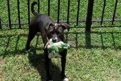 day care new orleans pet friendly new orleans pet day care and care doggie day care in nola