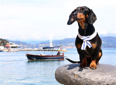 dog on boat to europe europe trip part 2 cinque terre italy crusoe the