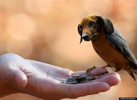 how to a bird puppy birds with heads and dogs with bird bodies are dirds derrrrr huffpost