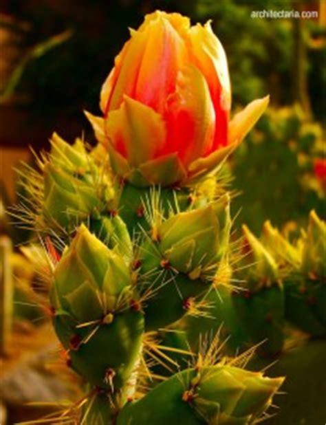 wallpaper bunga kaktus jenis bunga untuk dekorasi interior ruangan sangkarmas