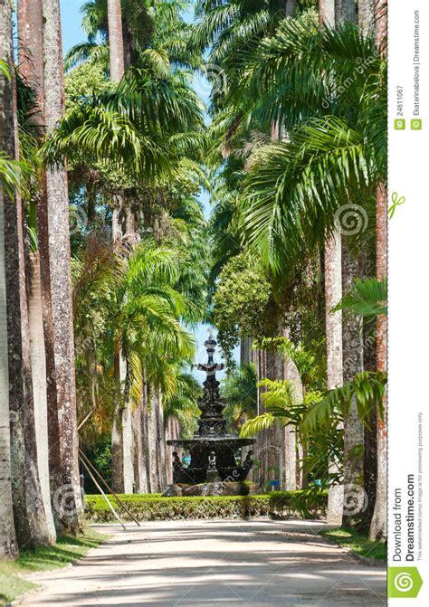 De Brazil Palm Gardens by De Brazil Palm Gardens De Brazil Palm Gardens Palm
