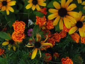 fall flower colors make a great decorating palette tcu