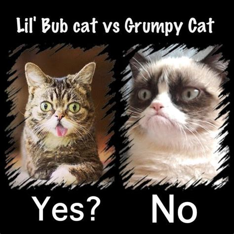 Lil Bub Meme - lil bub vs grumpy cat purrfect for caturday