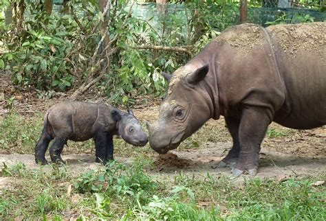 Saving Animals in the Wild: The Zoo's Top Field ...