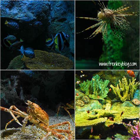Tiket Underwater World Pattaya Thailand Dewasa pattaya dan tempat wisata menarik di pattaya