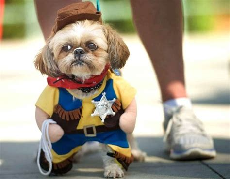 puppies dressed up dressed up as sheriff